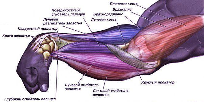 #фитнес#тренировки #самый_результативный_проект #BodyFit #Спортлайф#Витаспорт Интересные факты о мышцах ☝️ 200 мышц включаются в работу при одном только шаге. Сердце - самая выносливая мышца организма - работает постоянно. Мышцы растят и тренируют, о них написаны тонны спортивной литературы. Мы расскажем самое интересное. 1. Сколько всего мышц? Всего в человеческом организме насчитается от 640 до 850 мышц. Во время простой ходьбы организм задействует до 200 мышц. Мышечная ткань на 15%…
