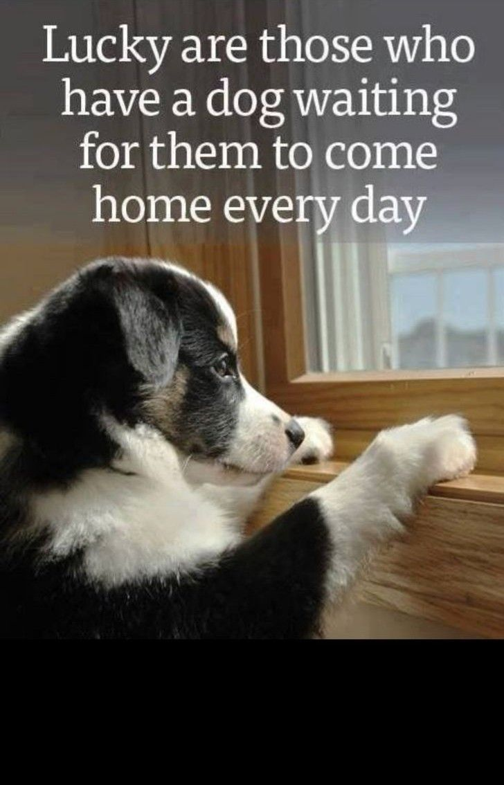 I Am Blessed With 2 Dogs Dogowners Dogcare Doglover Petlover Dog Dogquote In 2020 Dog Waiting Dog Quotes Dogs