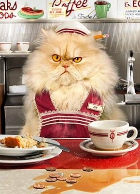another grumpy cat.
