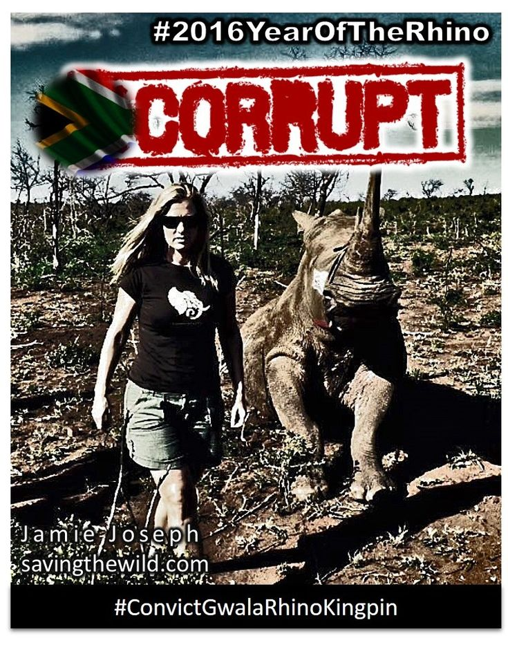 #ConvictGwalaRhinoKingpin - Justice system in the crosshairs as alleged rhino poaching kingpin goes to court