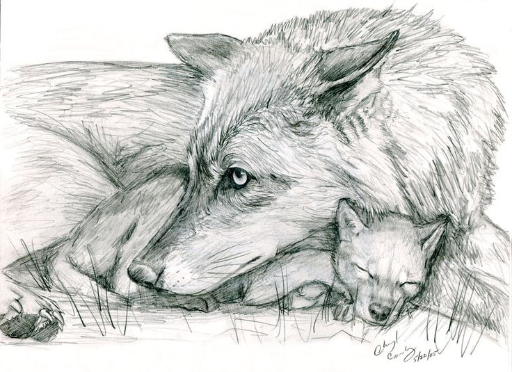 Wolf and Pup by silvercrossfox.deviantart.com on ...