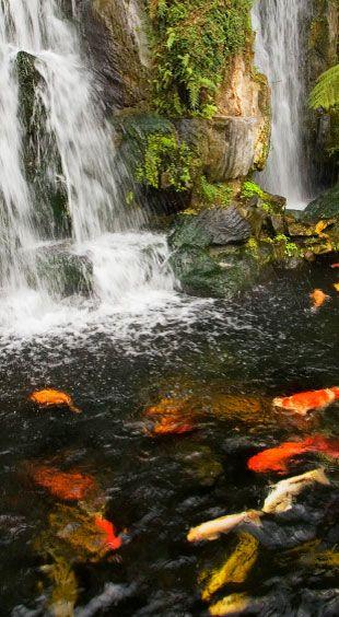 Koi pond pumps for natural, quiet aeration