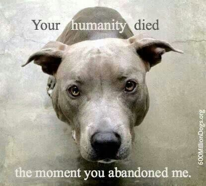 Can Dogs Feel Bad If Abandoned