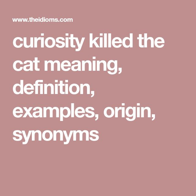 curiosity killed the cat meaning, definition, examples, origin, synonyms
