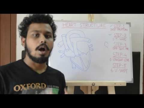 Easy way to draw heart structure by 5 steps | labeling of heart structure - YouTube