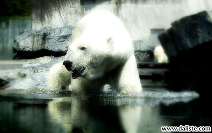 Wilhelma Zoo Stuttgart @ daliste.com #daliste #wilhelmazoo #zoo #stuttgart #deutschland #polarbear #germany #wilhelma #favoritezoo