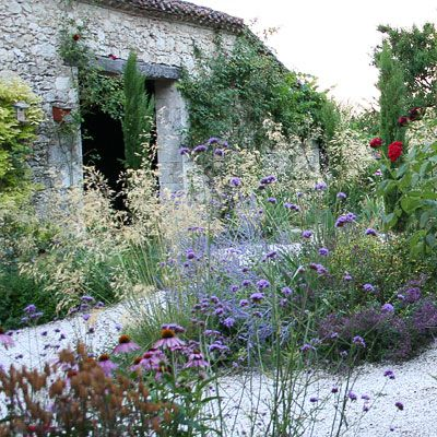 Garden design and photography: Topiaire Extraordinaire. Dry, gravel base garden entrance with beautiful use of transparents; including Verbena and Grasses with structural Echinacea and vertical conifers.
