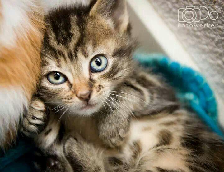 Kittenfotografie
