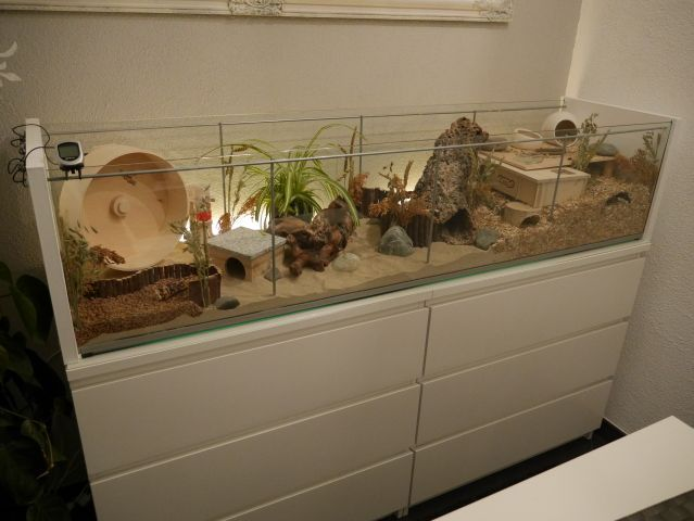I would love something like this for my snake, modified obviously for his needs :)