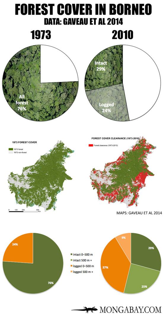 30% of Borneo's rainforests destroyed since 1973