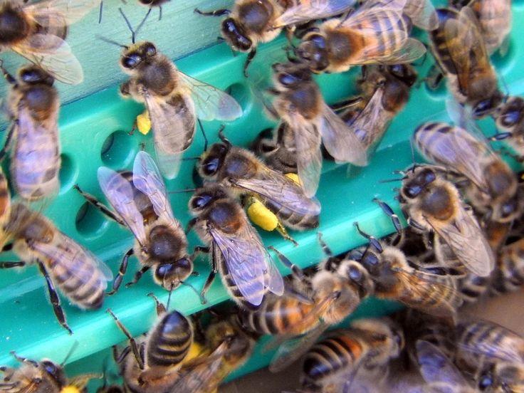 Ce dimanche a eu lieu la visite de printemps des ruches. C'est la première activité de la saison. Elle permet de donner un aperçu rapide de l'état de chaque colonie. Samedi, la météo est bof-bof. Pas folichon... Ça tombe bien, il y a le défilé carnavalesque...