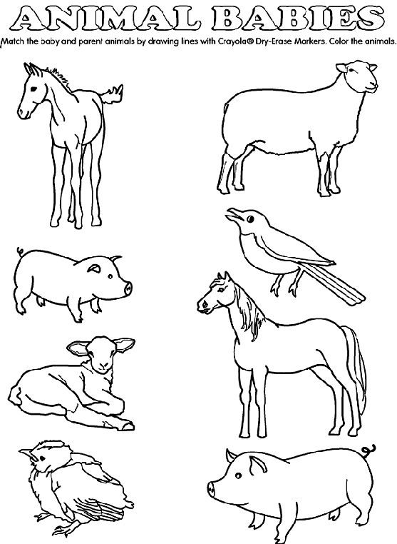 match the baby animals to their parents by drawing lines. Black Bedroom Furniture Sets. Home Design Ideas