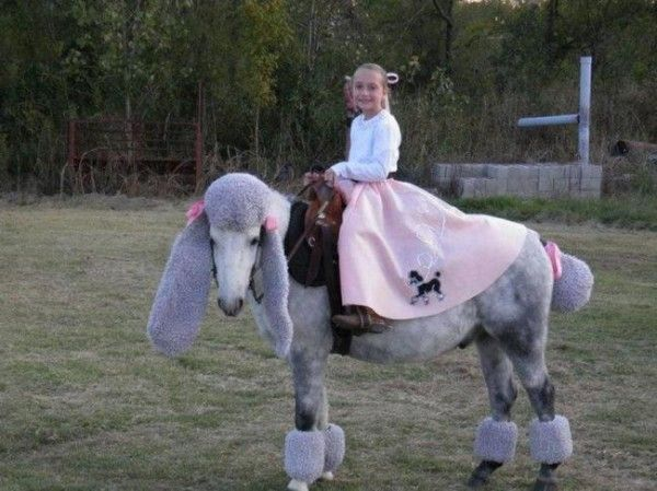 Poodle & '50s Girl/ Horse and Rider Costume