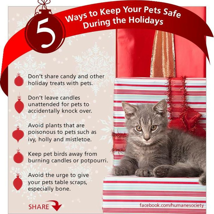 5 Ways to keep your Pets Safe this Holiday!