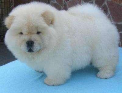 White puppy!