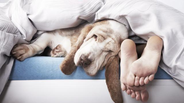Il faut dormir pour MAIGRIR ! - Franceandhappy