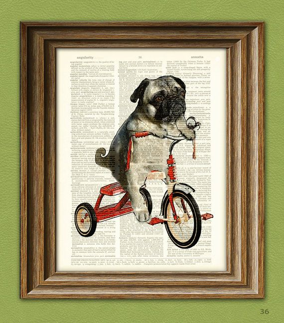 Pug on a trike.: Books Art, Vintage Dictionary, Tricycle Originals, Pugs Dogs, Art Prints, Prints Mike, Pugs Art, Trike Pugs, Old Books
