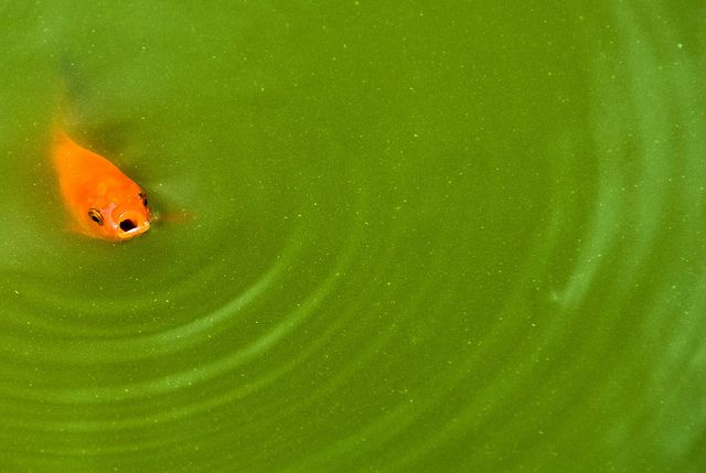 Colour accent - contrasting colours (orange-green) by Michael Millmore, via Flickr