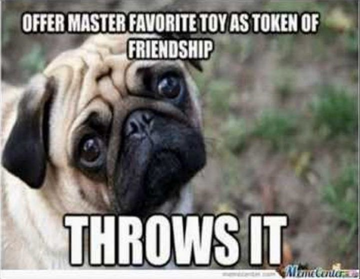 101 Lovable Pug Memes That Are Too Puggin Cute Funny Animal