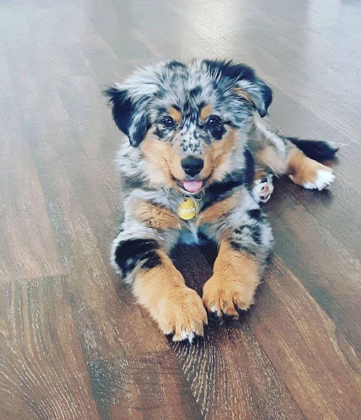 Aussie gift for kids kids dog shepherd dog shepherd