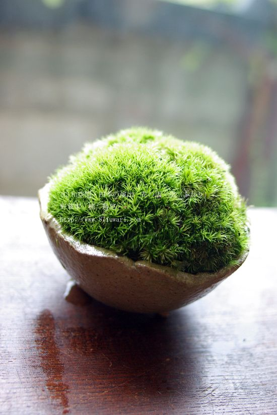 moss ball in a tiny terracotta pot