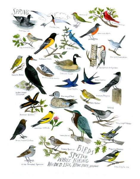 Hyde Parking Spring Birding print by Diana Sudyka -- So lovely. I would adore one of these for the greater Boston area.