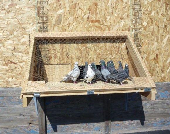 Chicken Coops Ideas