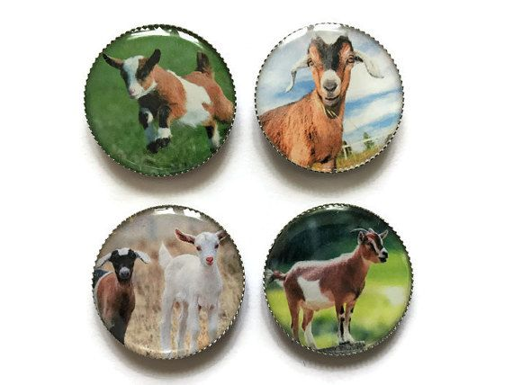 Goat magnets, farm animal magnets, baby goat magnets, animal magnets
