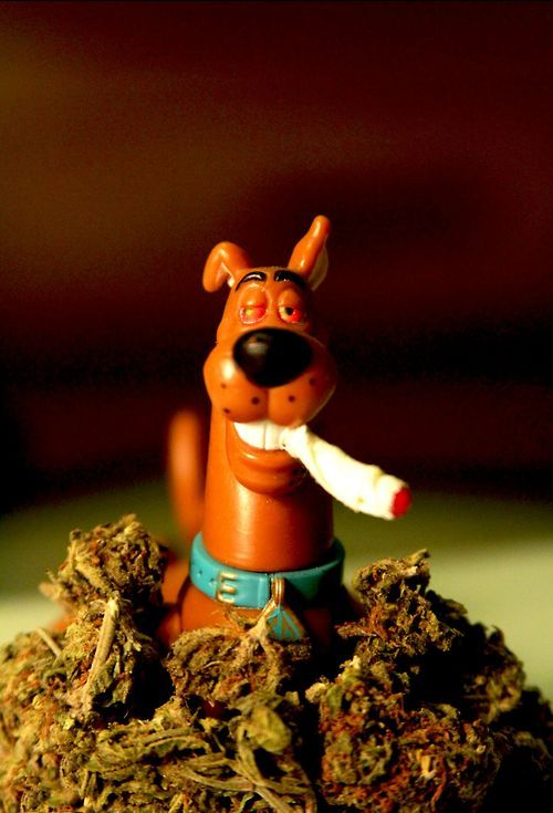 scooby weed