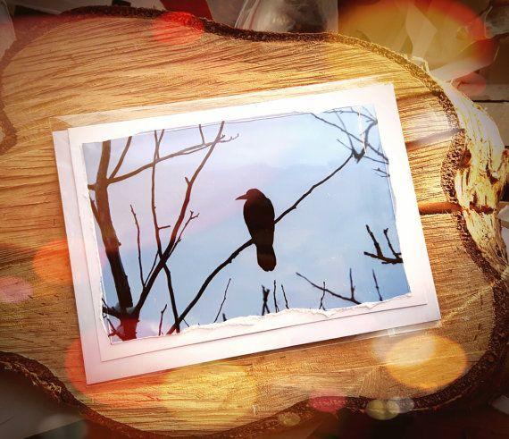 Kunst Fotografie Winter Grußkarte  Rook Vögel  von PaperPineTree