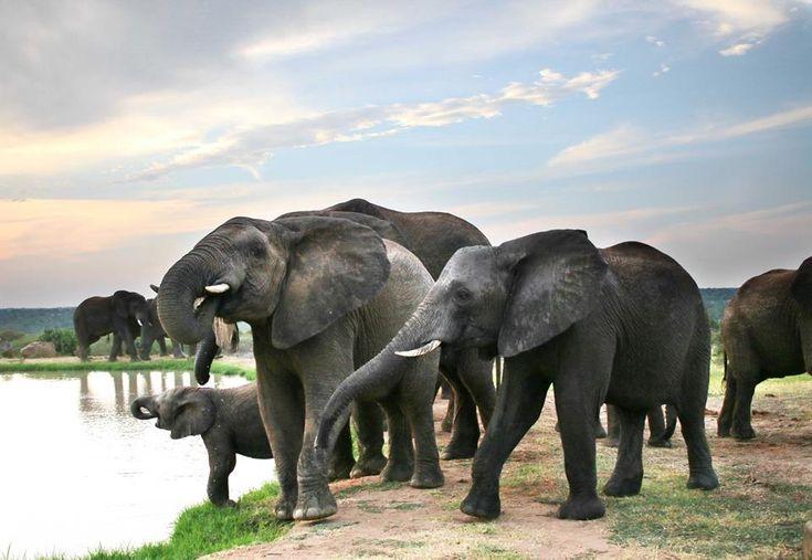 Sending you love from Camp Jabulani. #HappyValentinesDay #CampJabulani #Elephants