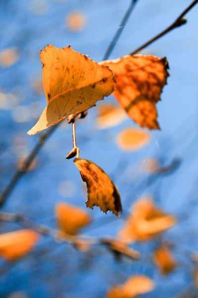 'Herbstliches Blattgeflatter' von Heidrun Lutz bei artflakes.com als Poster oder Kunstdruck $16.63 #Herbst #Blätter