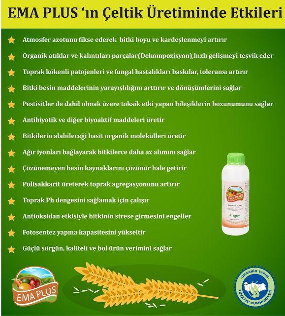 Etkin Mikroorganizmalar: Çeltik Üretiminde Etkin Mikroorganizma Kullanımı (...