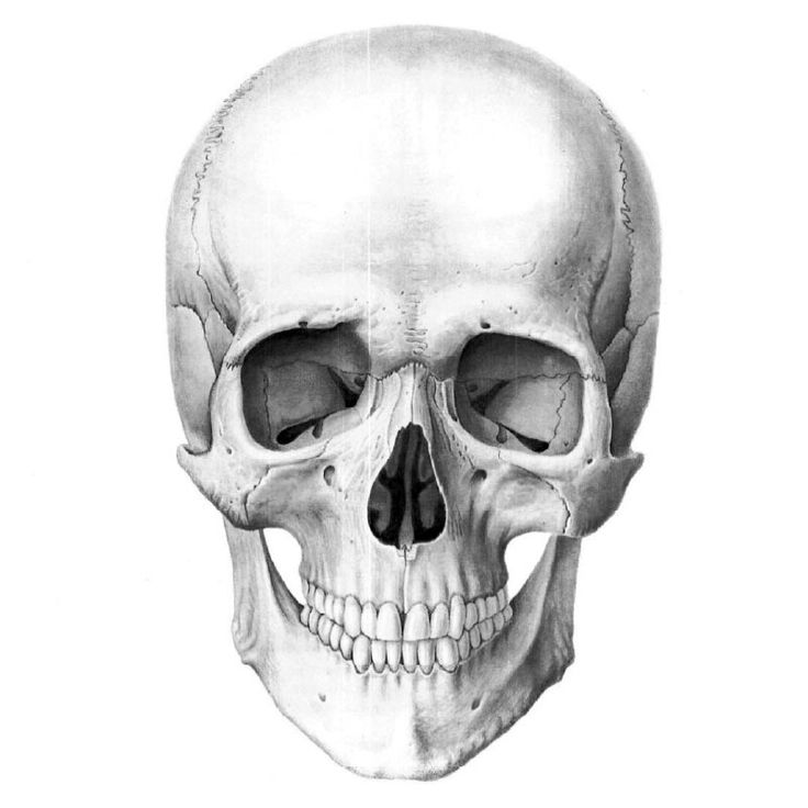 недавно картинки голова черепа исполнением ранее выданного
