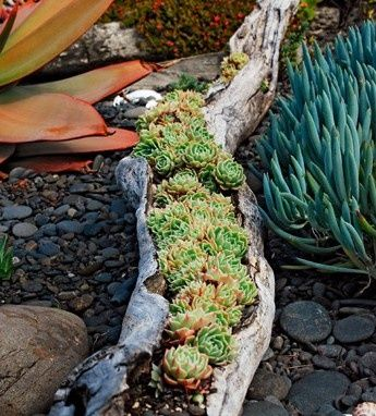 Succulents in wood trunk