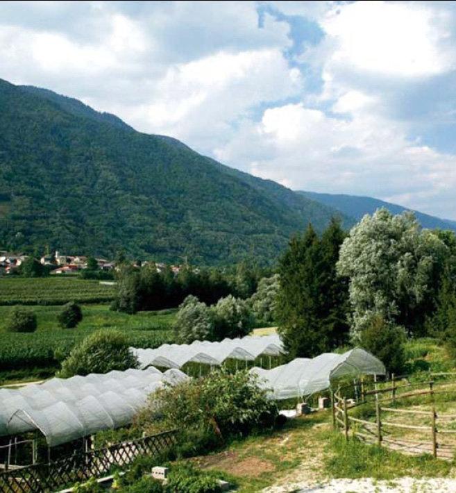 Azienda agricola Lungo i Monti via Lungomonti, 3 a 2 km dal paese in zona Oltrebrenta 38050 Novaledo – Trento  Cell.  330 536469