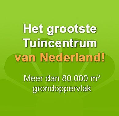 Largest Garden centrum in The Netherlands located in Aalsmeer Tuincentrum Het Oosten - Het grootste tuincentrum van Nederland