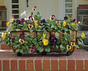 30 inch Window Box Planter Liner Set |Window Box Planters | Kinsman Garden
