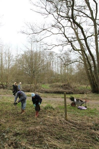 Hunt Nature Park, Shalford. Planting trees including bird cherry, aspens and yews. February 2014.