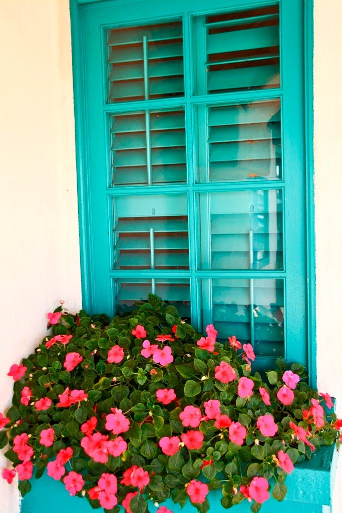 impatiens window boxes. I love the pink w/the turquoise!
