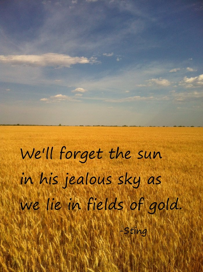Blue Skies Of Texas >> Texas wheat field of gold, gold, wheat, fields, sunshine, blue skies, love, Sting, passion ...