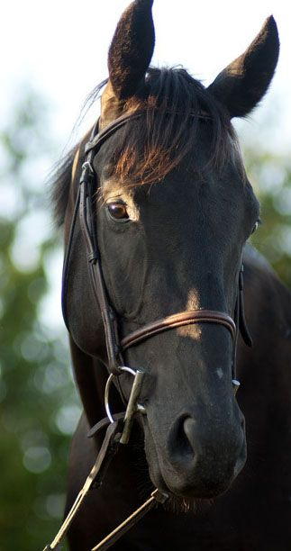 bridle-less:  Perfection is my horse. http://bridle-less.tumblr.com