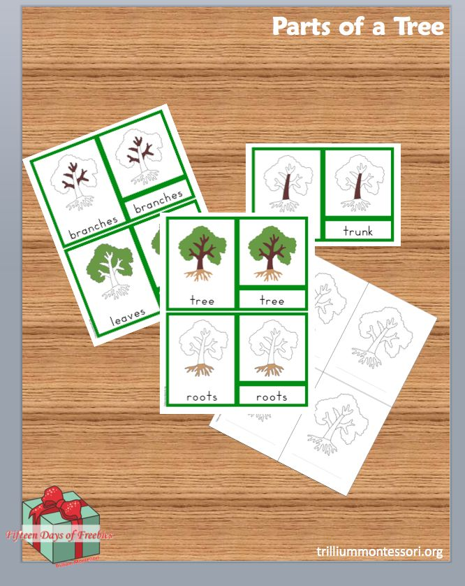 Montessori Parts of a Tree 3-Part Cards (free for a limited time)
