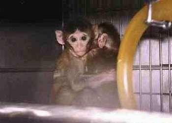 La Universidad de Sevilla malgasta el dinero en experimentos con animales