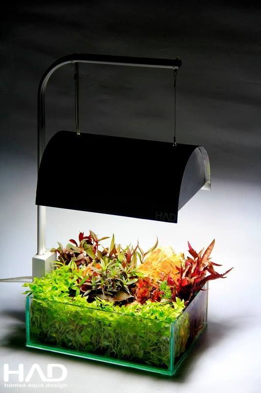 Die besten 25+ Pflanzen aquarium Ideen auf Pinterest Aquarium - deko fur aquarium selber machen