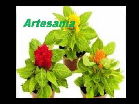 1000 images about plantas con abono on pinterest for Vivero plantas exoticas