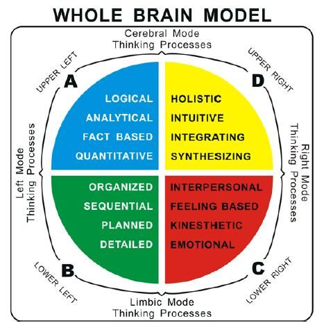 how the brain works psychology pdf
