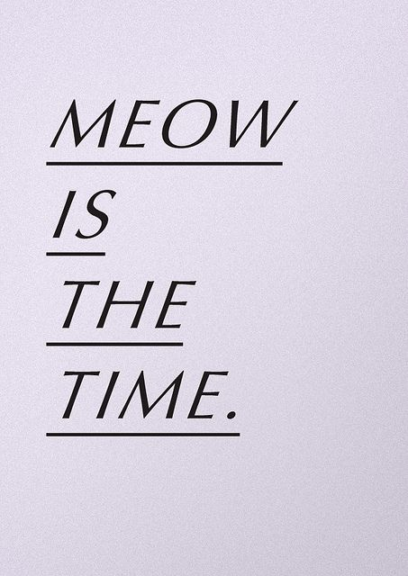 meow. right meow.: Engine Prints, Inspiration, Cat Things, Meow Meow, Cat Meow, Attraction Cat, Quotes Prints Posters Cards, Meow Time, Posters Typography