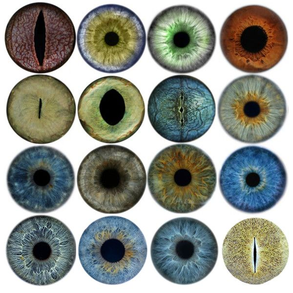Dragon Eyes Halloween Irises Babi Color Charts Drawing Reference