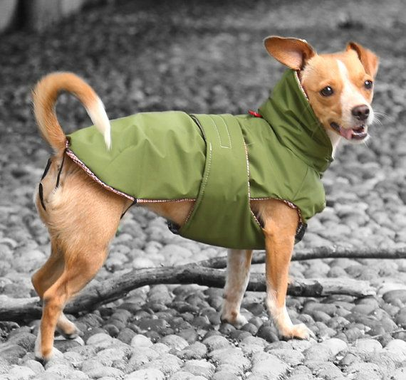 Reversible Forest Green raincoat for your dog. by AmiciDiAlia